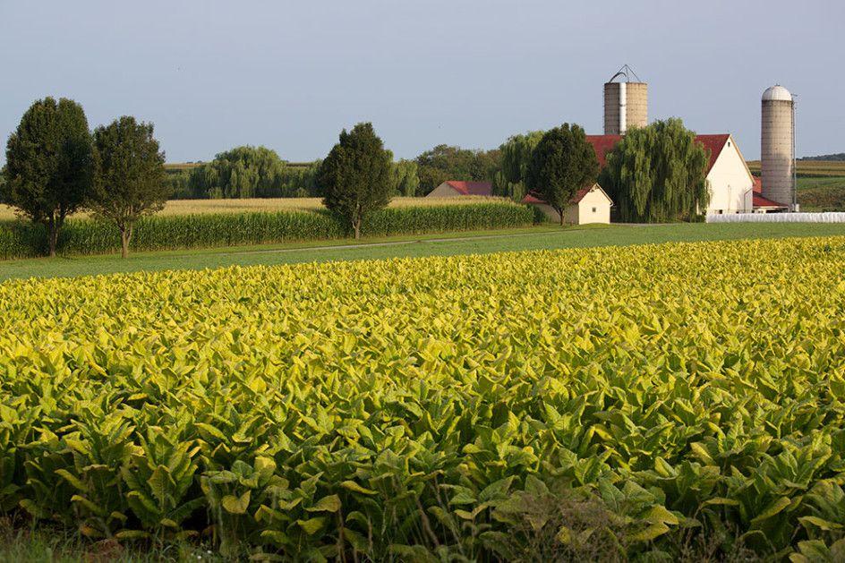 Amish Farm, Pennsylvania